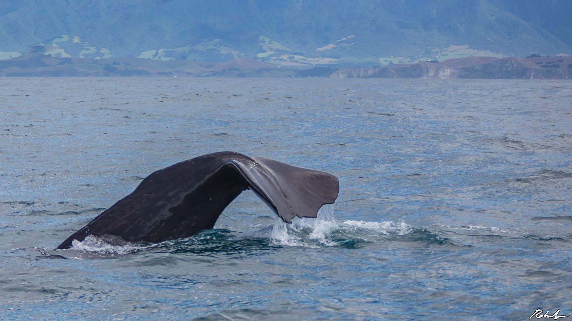 The Best Places in The World To Whale Watch: Kaikoura, New Zealand