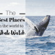 The Best Places In The World To Whale Watch