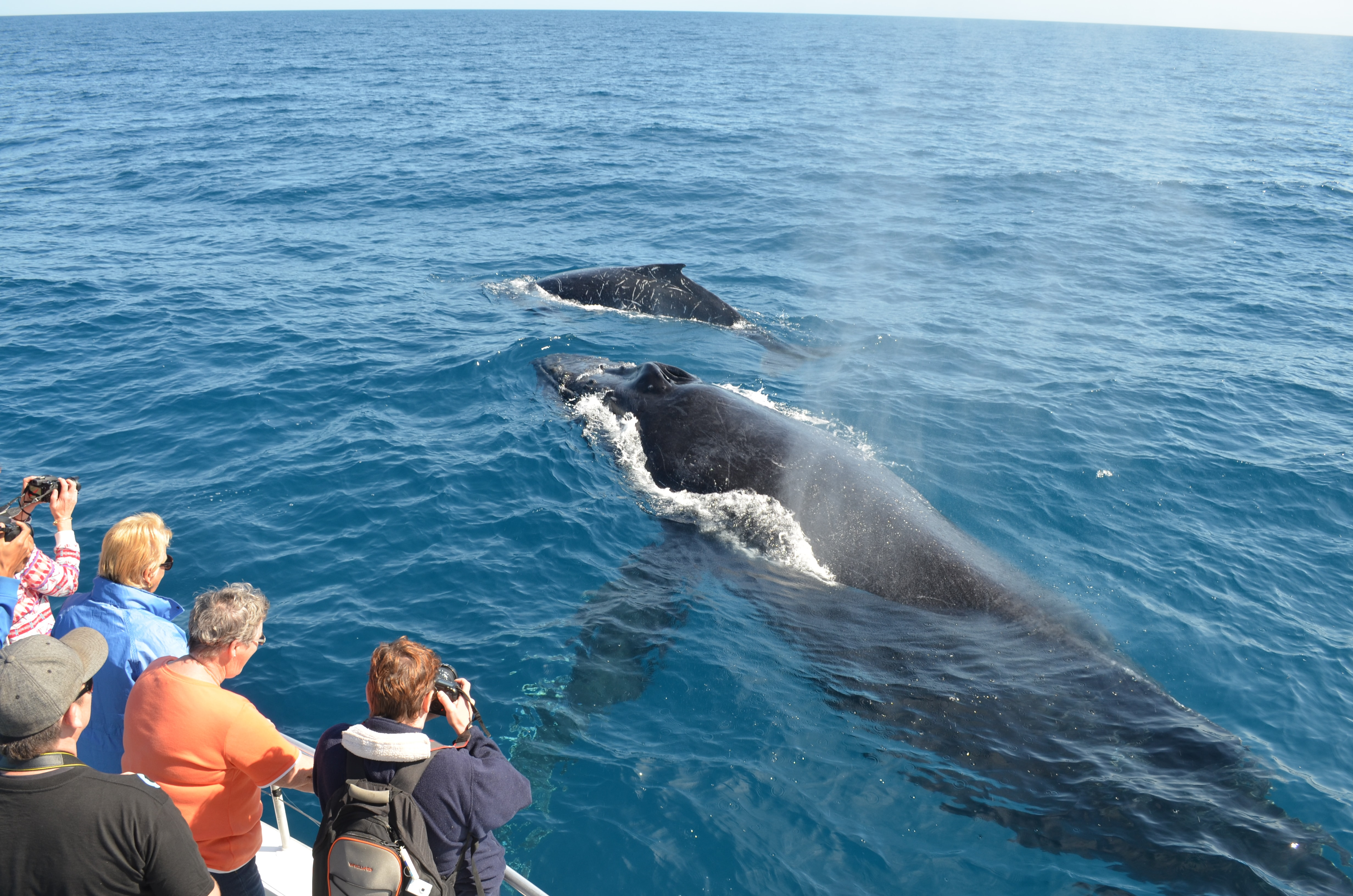 The Best Places In The World To Whale Watch: Australia