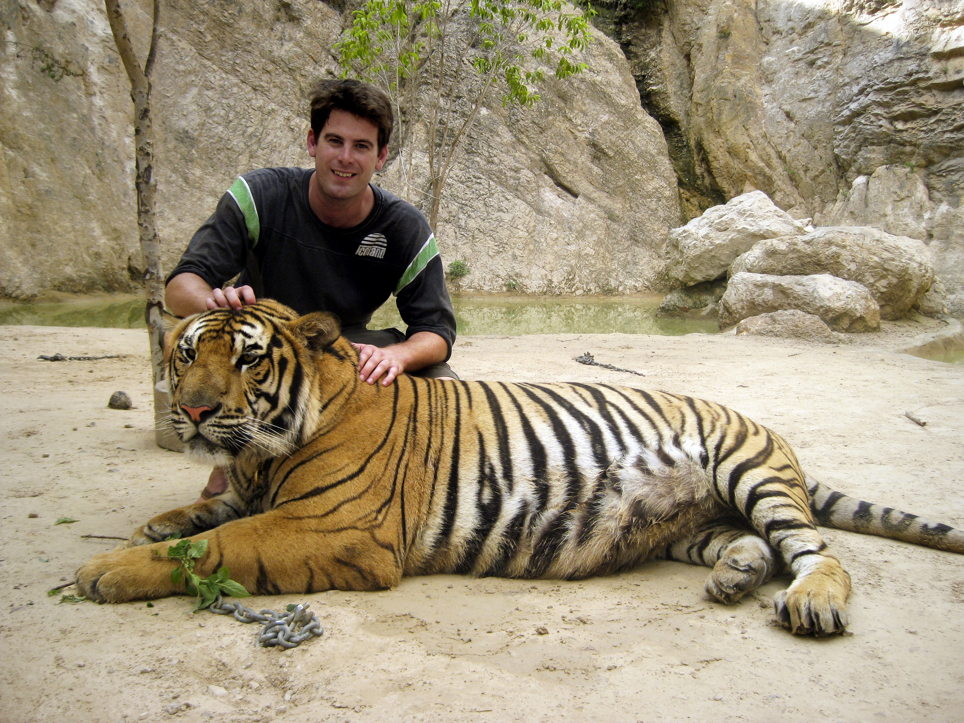 Tiger Selfie - World's Cruelest Tourist Attractions