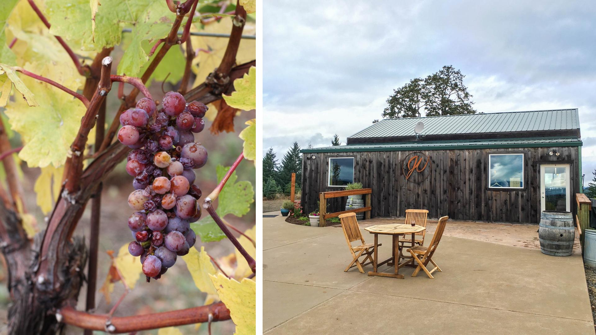 J wrigley vineyards