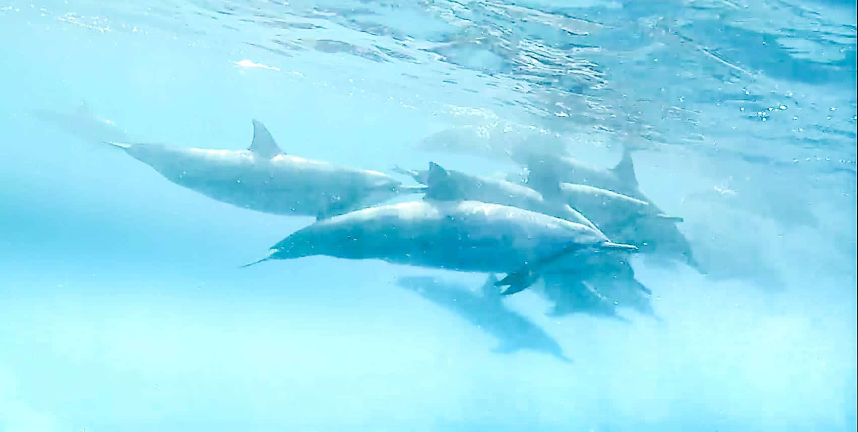 Swimming with Dolphins on Hawaii's Big Island