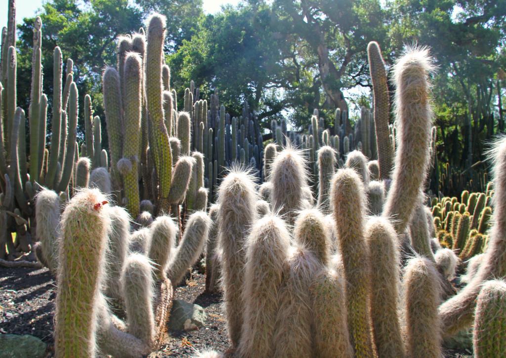 Lotusland Cactus Garden