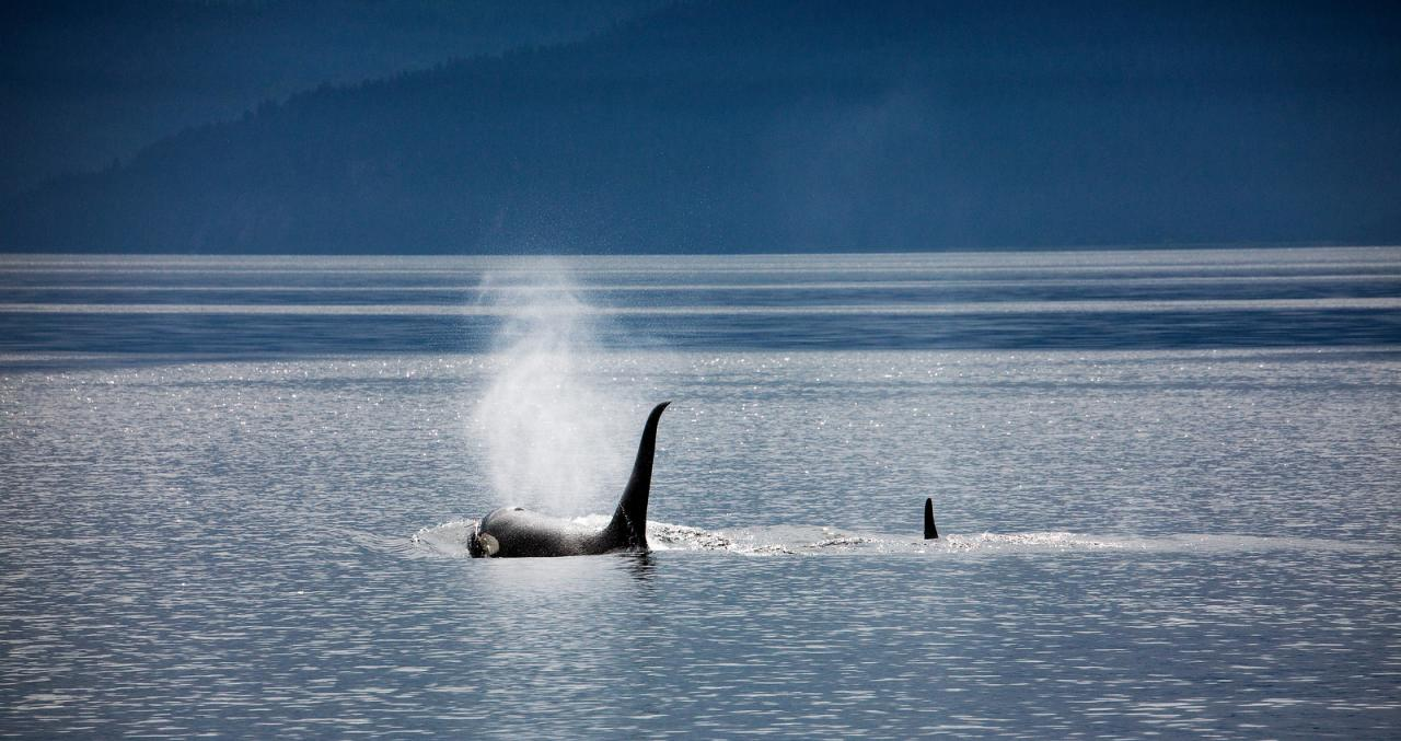 The best places in the world to whale watch: Alaska