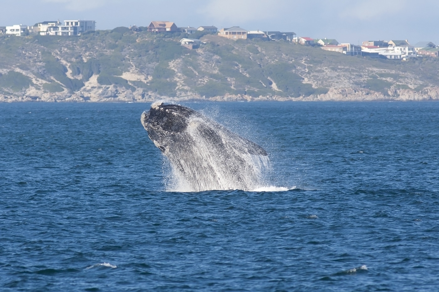 The Best Places in the world to whale watch: South Africa