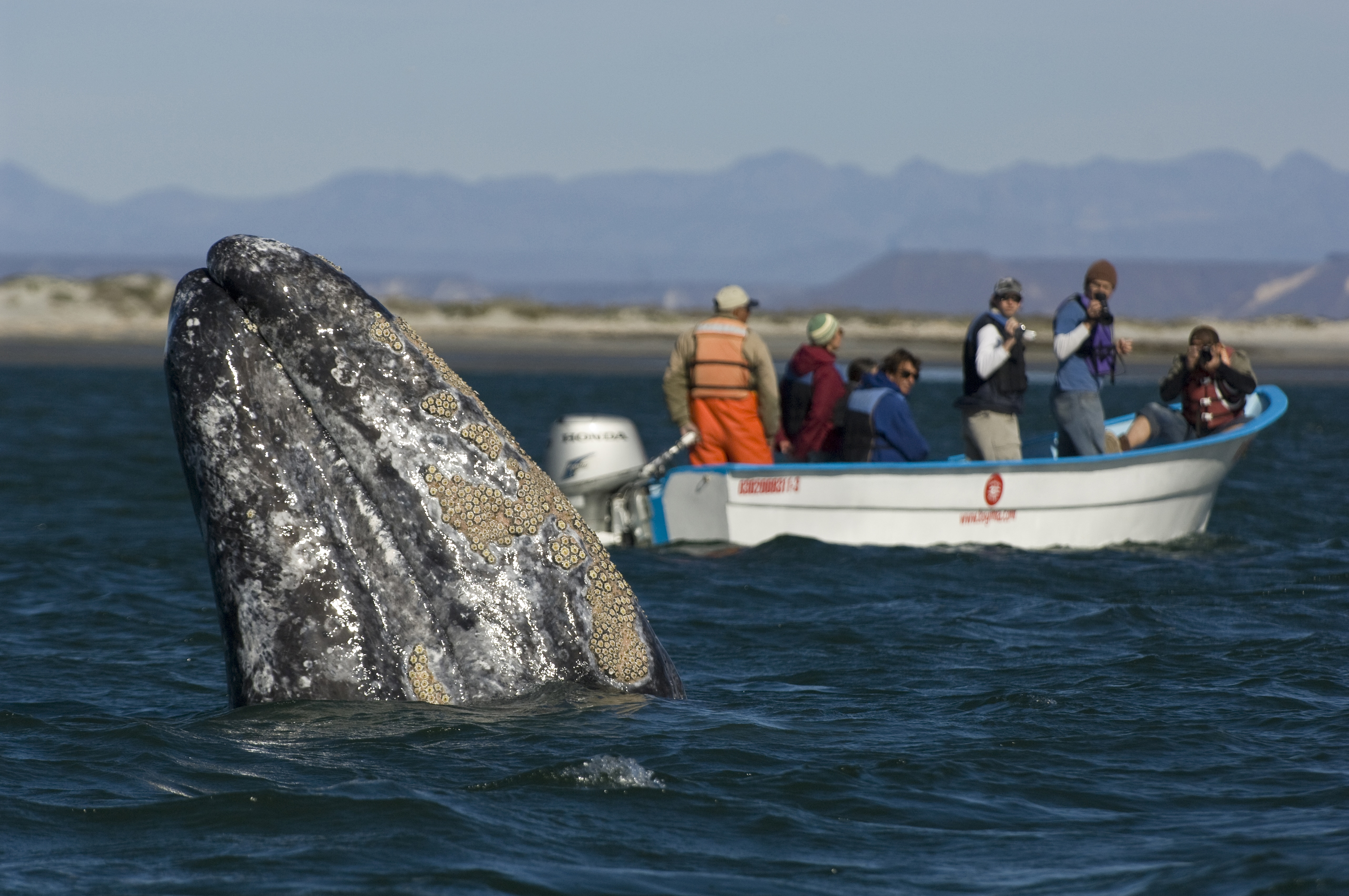 The best places in the world to whale watch: Baja