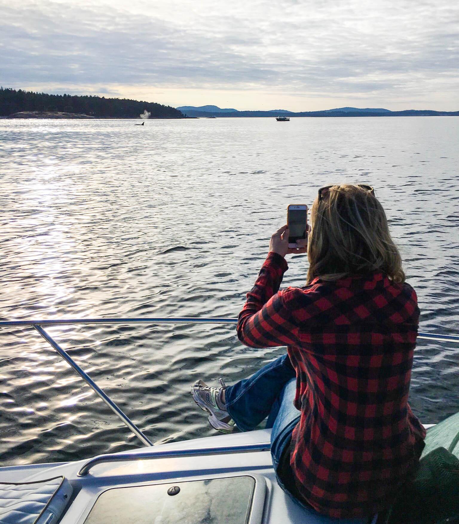 Whale Stalking San Juan Islands