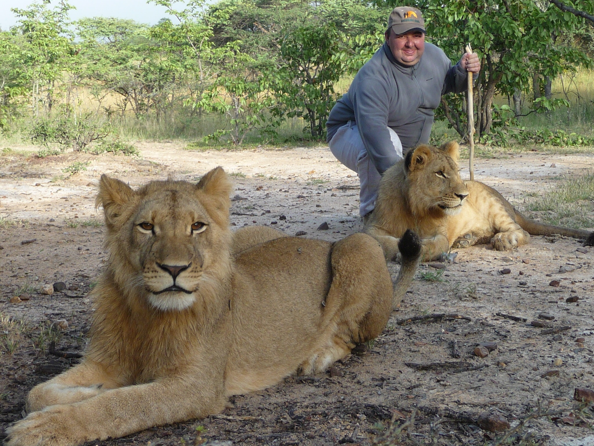 Walking with lions - The world's cruelest tourist attractions