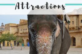 The world's cruelest animal attractions