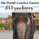 The world's cruelest animal attractions