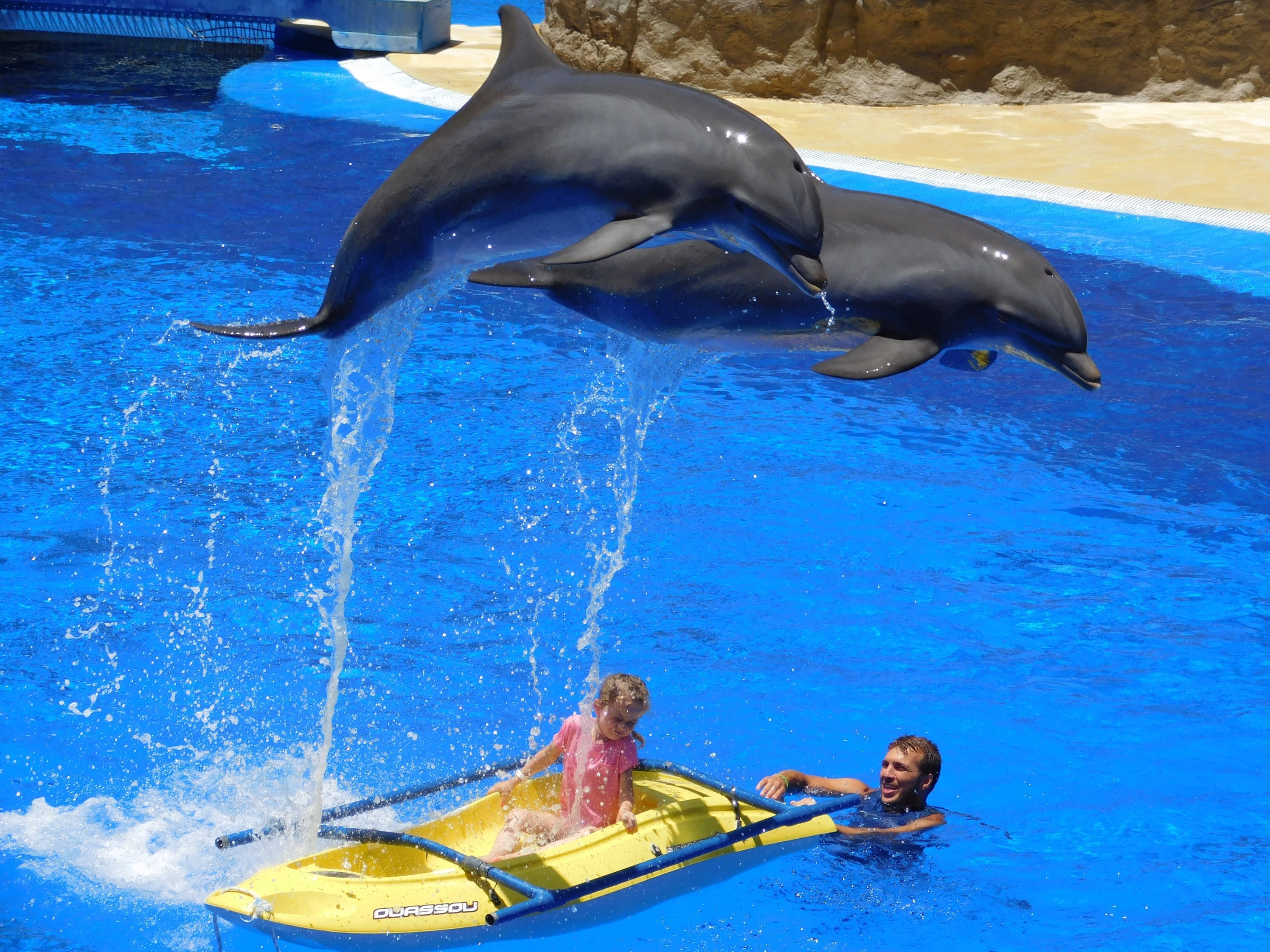 Swimming with Dolphins - World's Cruelest Tourist Attractions