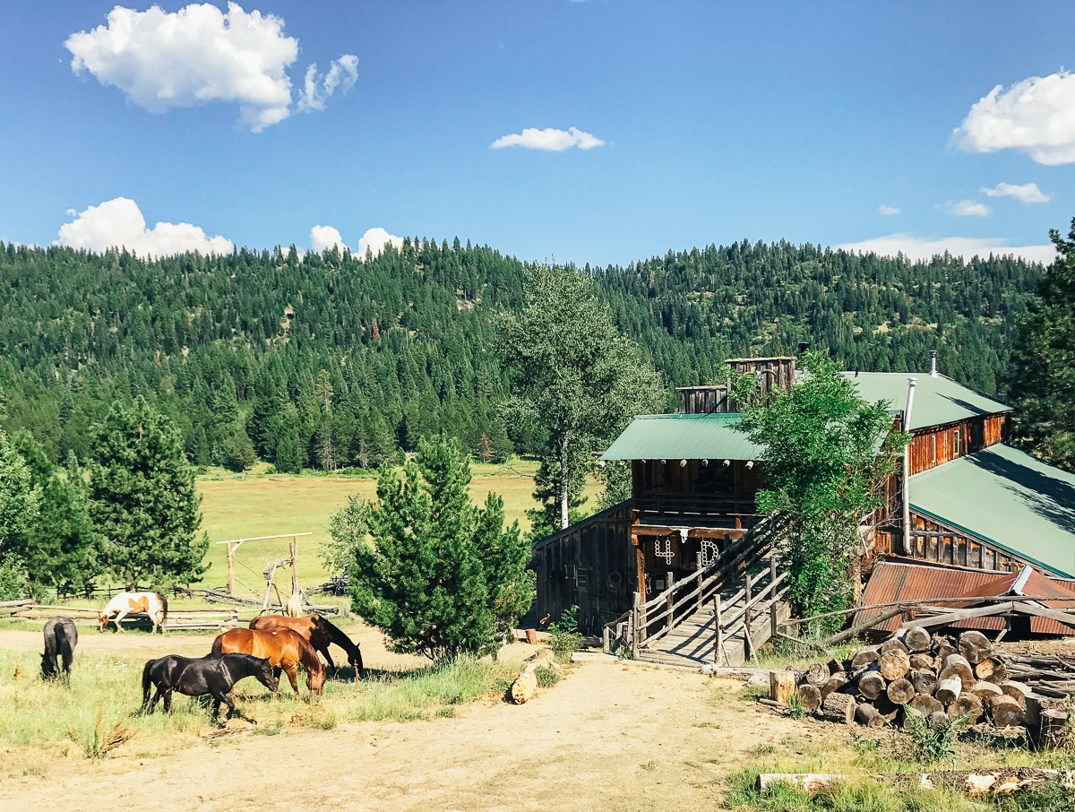 4D Longhorn Ranch, Idaho
