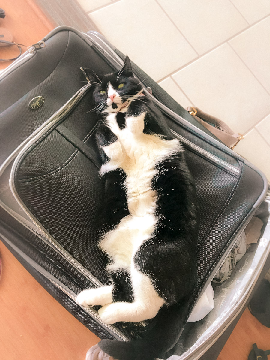 Flying with Pets- Airplane Travel with Cat