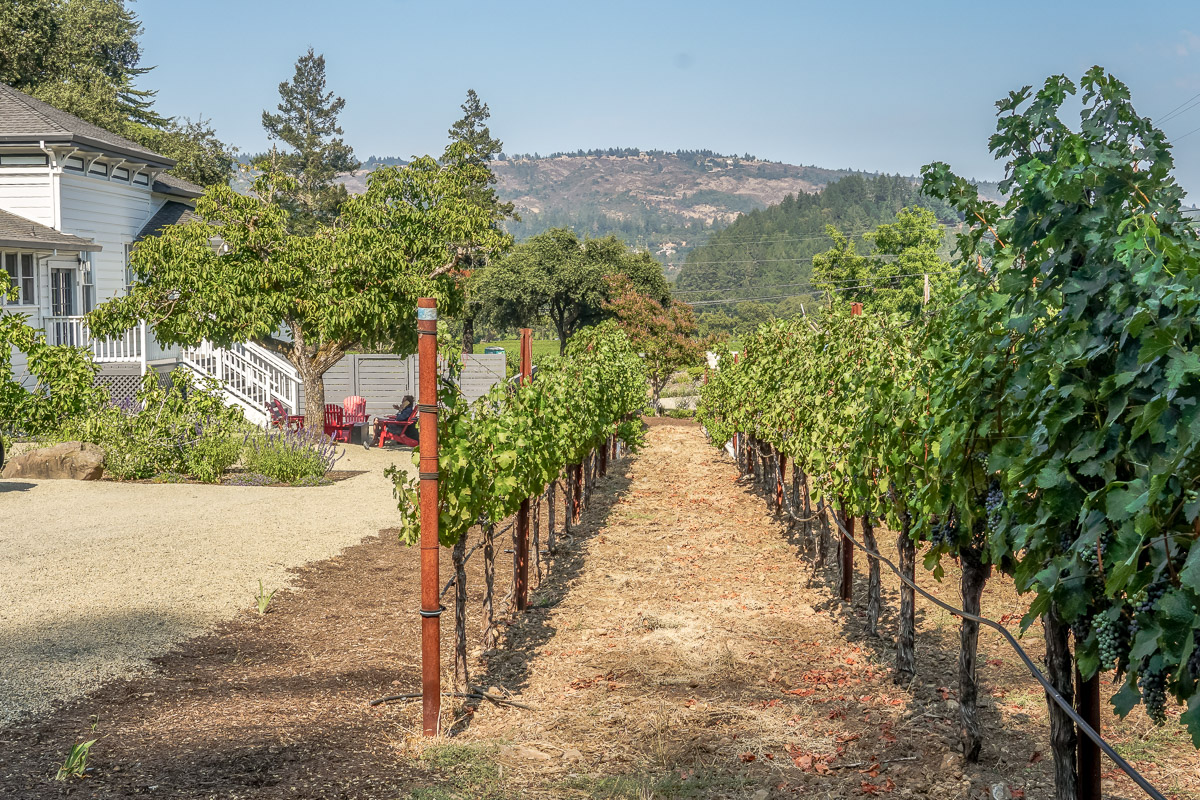 Taking the Road Less Traveled in Napa Valley - AXR